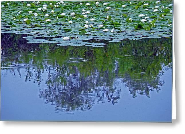 The Forest Beneath The Lilypads Greeting Card by Jean Hall