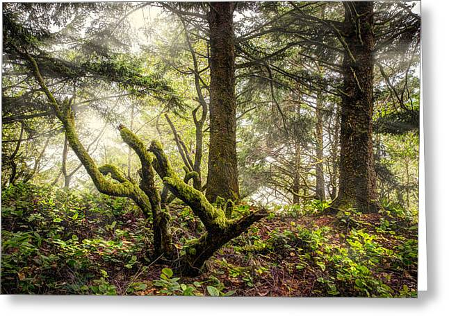 Foggy Beach Greeting Cards - The Forest Greeting Card by Debra and Dave Vanderlaan