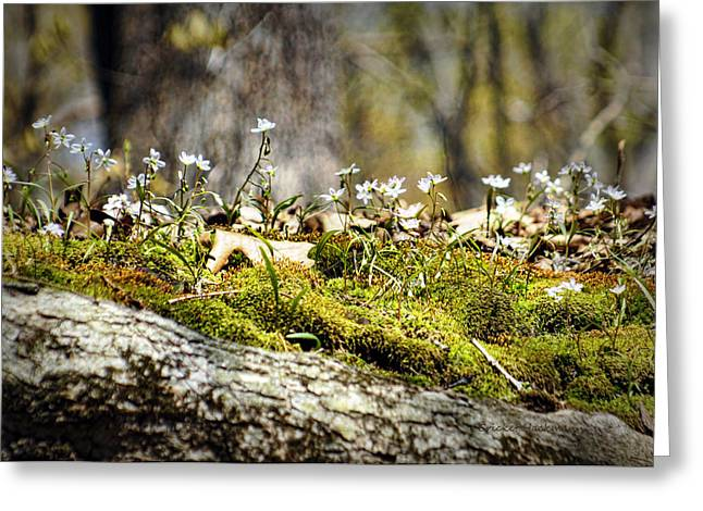 Tree Roots Photographs Greeting Cards - The Forest Floor Greeting Card by Cricket Hackmann