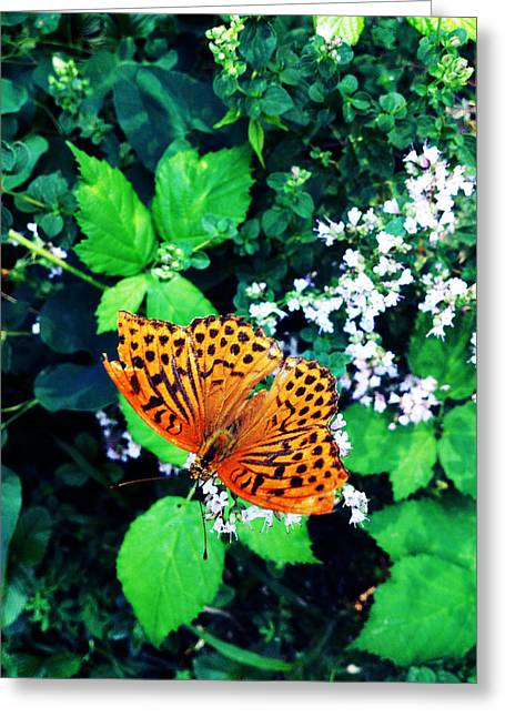 Lucy D Photographs Greeting Cards - The Forest Guardian 2 Greeting Card by Lucy D