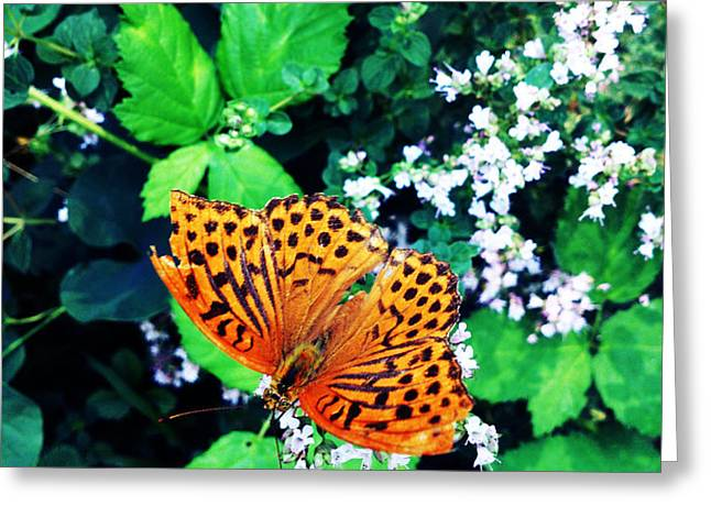 The Forest Guardian 2 Greeting Card by Lucy D