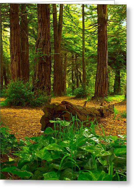 Peace Greeting Cards - The Forest of Golden Gate Park Greeting Card by Bryant Coffey