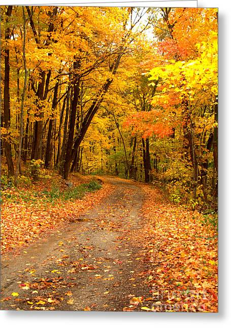 Indiana Scenes Greeting Cards - The Forest Road Greeting Card by Jim McCain