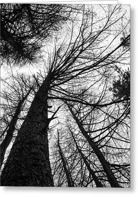 Hiking Greeting Cards - The Forest Stands Tall. Greeting Card by Daniel Kay