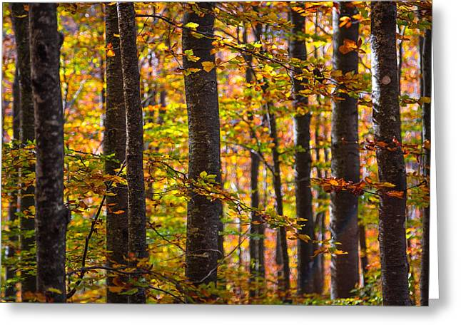 Orangem Tree Greeting Cards - The forest Greeting Card by Stefano Termanini