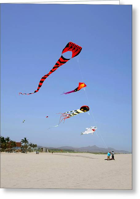 Breezy Greeting Cards - The forgotten joy of soaring kites Greeting Card by Christine Till