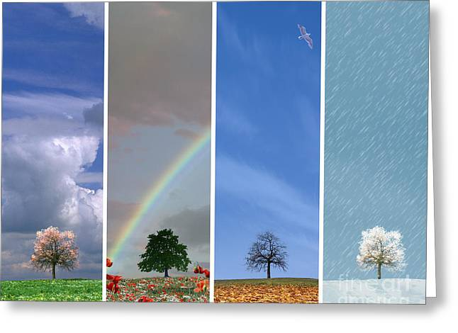 Creative Manipulation Greeting Cards - The Four Seasons Greeting Card by Edmund Nagele