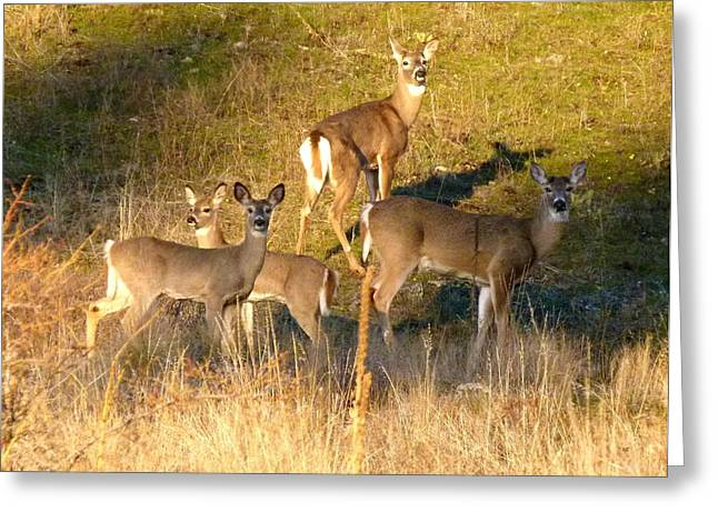 Cautious Greeting Cards - The Foursome Greeting Card by Will Borden