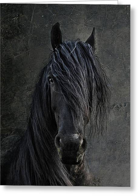 Nature Portrait Greeting Cards - The Frisian Greeting Card by Joachim G Pinkawa