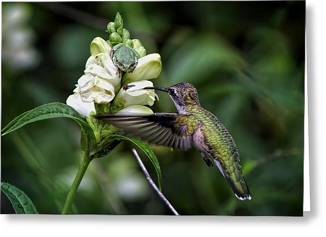 Flying Frog Greeting Cards - The Frog And The Hummingbird Greeting Card by Ron Grafe