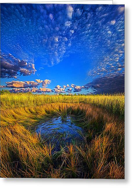 Geographic Greeting Cards - The Frog Pond Greeting Card by Phil Koch