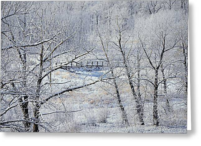 Fish Creek Greeting Cards - The Frozen Bridge Greeting Card by Maria Angelica Maira