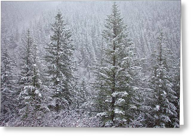 River Scenes Greeting Cards - The Frozen Forest Greeting Card by Darren  White