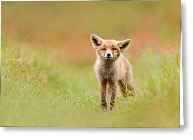 Suckling Greeting Cards - The Funny Fox Kit Greeting Card by Roeselien Raimond