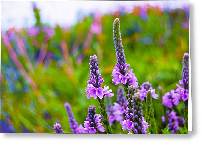 The Nature Center Greeting Cards - The Garden Palette Greeting Card by Christi Kraft