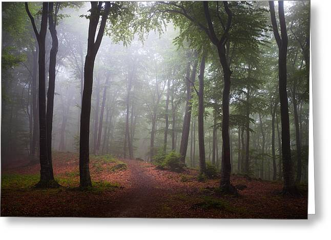 Foggy Day Greeting Cards - The Garden Greeting Card by Toma Bonciu