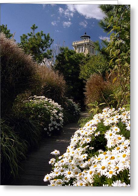 Garden Of Daisies Greeting Cards - The Gardens At Hereford Greeting Card by Skip Willits