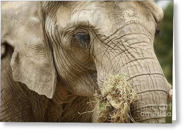Shelley Myke Greeting Cards - The Gathering - Elephant at Work Greeting Card by Inspired Nature Photography By Shelley Myke