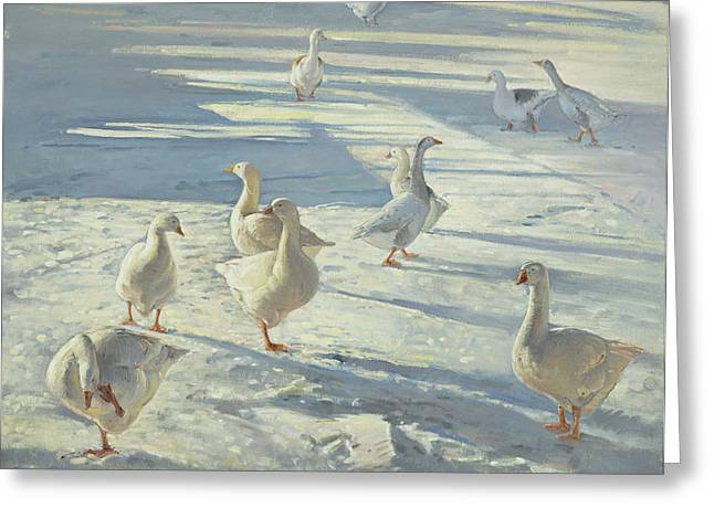 Geese Photographs Greeting Cards - The Gathering Oil On Canvas Greeting Card by Timothy Easton