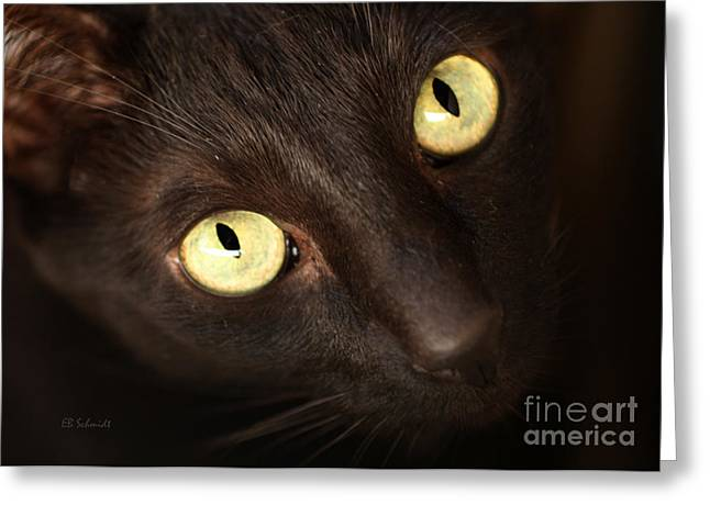 Shelter Kitty Greeting Cards - The Gaze Greeting Card by E B Schmidt