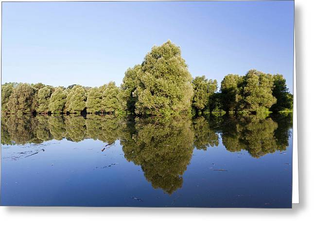 The Gemenc Forest In The Danube-drava Greeting Card by Martin Zwick