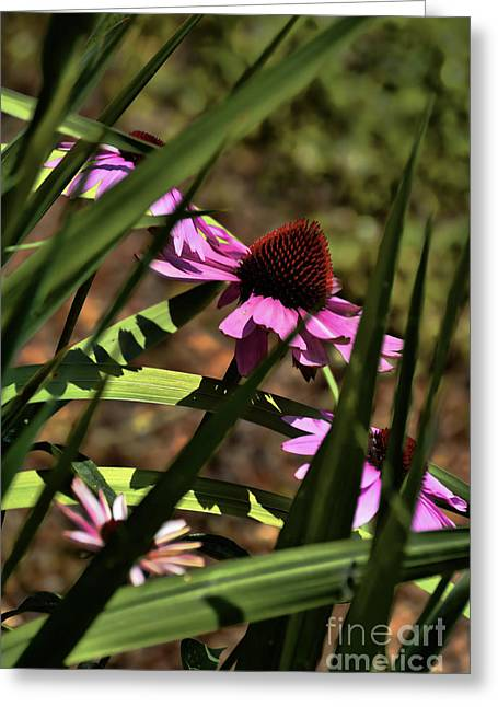 Huntsville Greeting Cards - The General A Purple Cone Flower Greeting Card by Lesa Fine
