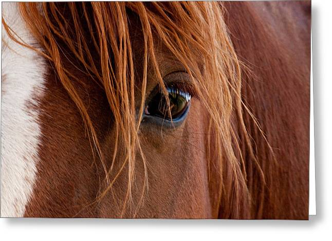 Eyelash Greeting Cards - The gentle eye  Greeting Card by Eric Rundle