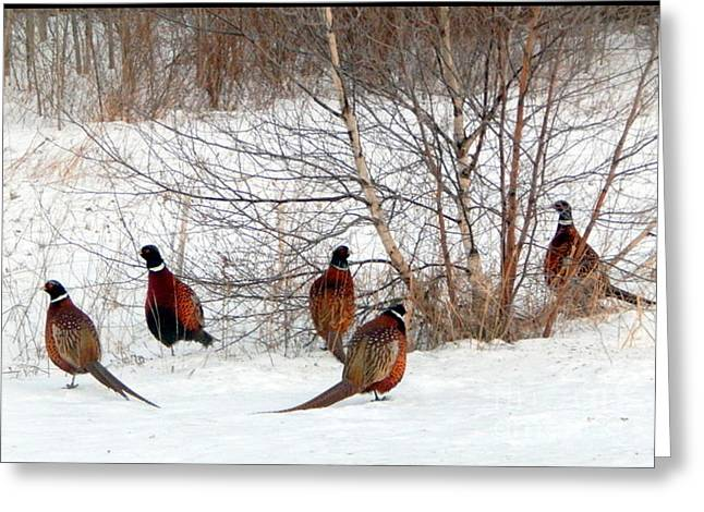 Wintry Greeting Cards - The Gentlemans Club Greeting Card by Karen Cook