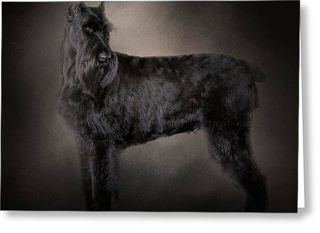 Artistic Photography Greeting Cards - The Giant Black Schnauzer Greeting Card by Jai Johnson