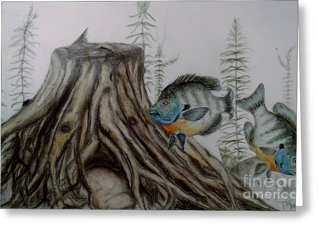 Bluegill Greeting Cards - The Gills Greeting Card by Ted Reeves