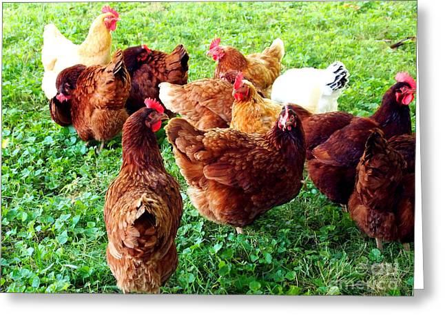 Free Range Hens Greeting Cards - The Girls Greeting Card by Deborah Fay