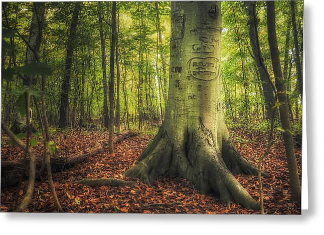 Tree Roots Greeting Cards - The Giving Tree Greeting Card by Scott Norris