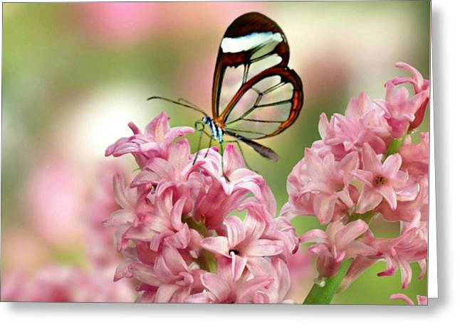 The Glasswing Greeting Card by Morag Bates