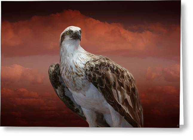 Australia Wildlife Greeting Cards - The Glory of an Eagle Greeting Card by Holly Kempe