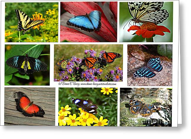 The Glory Of Butterflies 3 Greeting Card by Diane E Berry