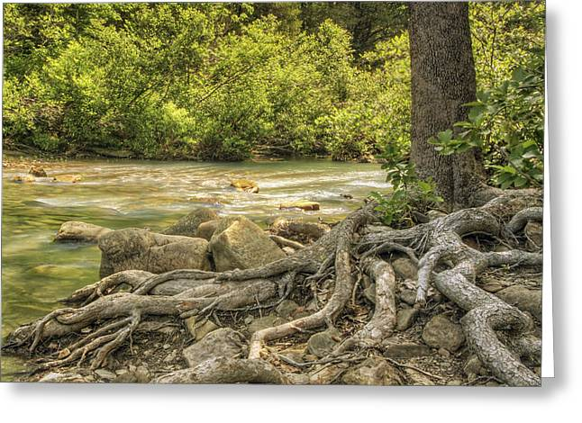 Gnarly Greeting Cards - The Gnarled Roots of Haw Creek Greeting Card by Jason Politte