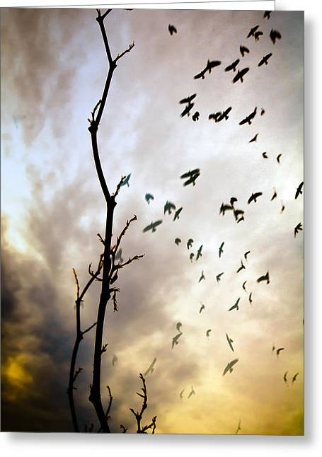 Flock Of Bird Greeting Cards - The Gods Laugh When The Winter Crows Fly Greeting Card by Bob Orsillo