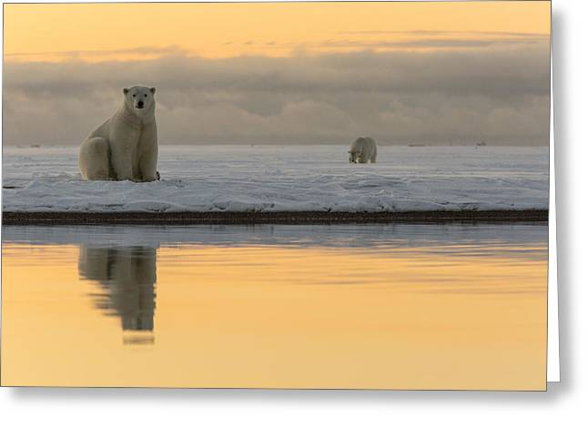 Wildlife Refuge. Greeting Cards - The Golden Coast Greeting Card by Tim Grams