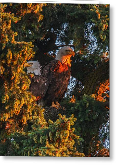 Fir Trees Greeting Cards - The Golden Hour Greeting Card by Angie Vogel
