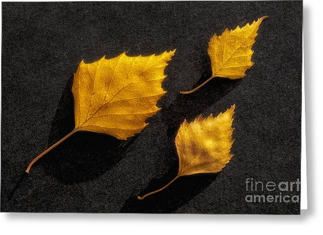 Salo Greeting Cards - The Golden leaves Greeting Card by Veikko Suikkanen