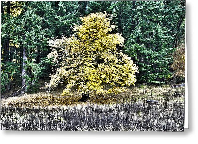 Nature Greeting Cards - The Golden Oak Greeting Card by Graham Foulkes