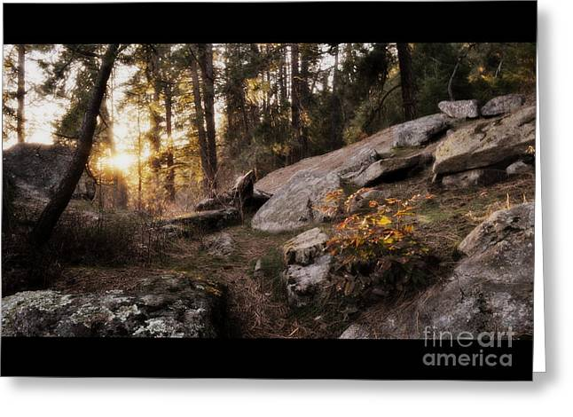 Spokane Greeting Cards - The golden trail Greeting Card by Ana Lusi