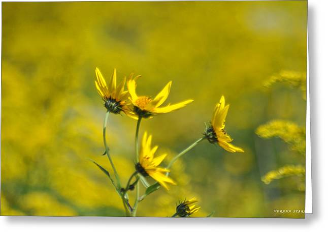 Indiana Flowers Greeting Cards - The Golden Wildflowers Greeting Card by Verana Stark