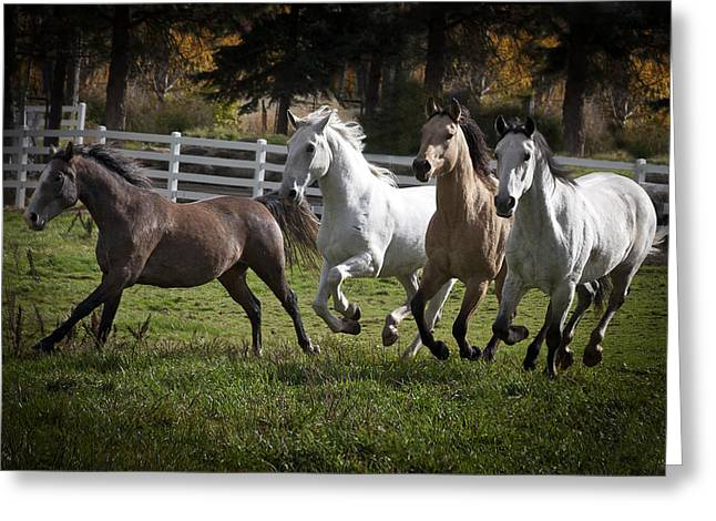 Vale Greeting Cards - The Goldendale Four 7277 Greeting Card by Wes and Dotty Weber