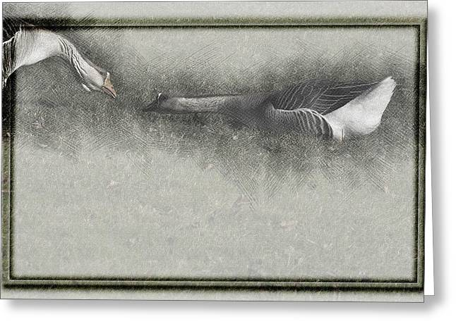 Mother Goose Greeting Cards - The Goose and the Gander Greeting Card by K Powers  Photography