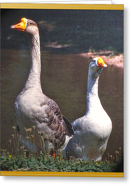 Patricia Keller Greeting Cards - The Goose and The Gander Greeting Card by Patricia Keller