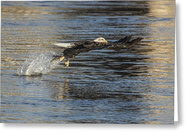 Wisconsin Fishing Greeting Cards - The Grab Greeting Card by Thomas Young