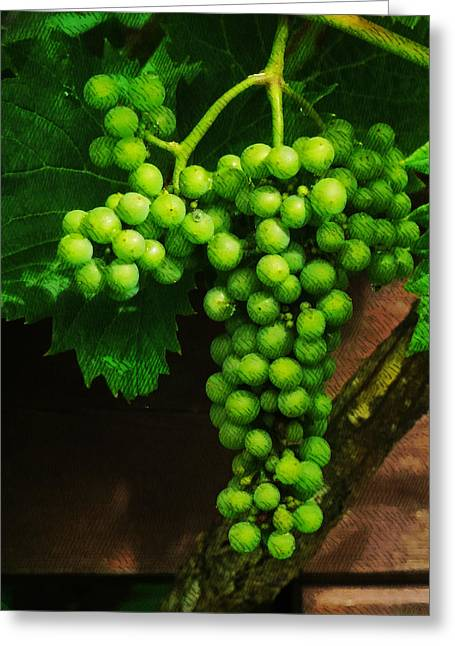 Crosshatching Greeting Cards - The Grape Vine Greeting Card by Steve Taylor