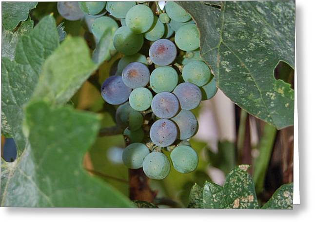 The Grapes Greeting Card by Holly Blunkall