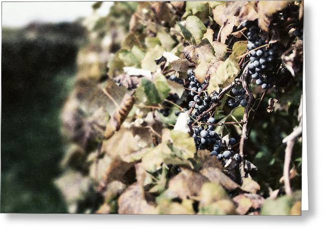 The Grapevines Greeting Card by Lisa Russo